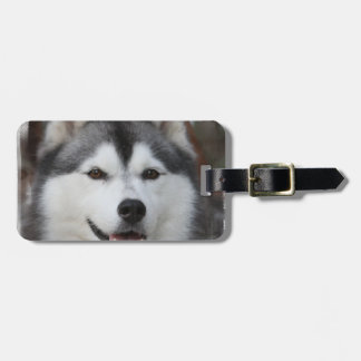 Husky Dog  Luggage Tag