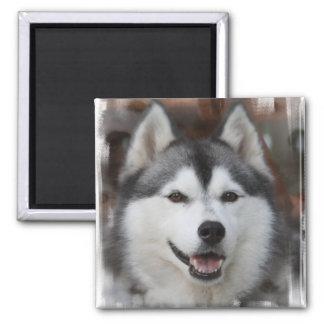 Husky Dog Magnet Refrigerator Magnets