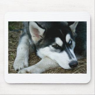 Husky Dog Mouse Pad