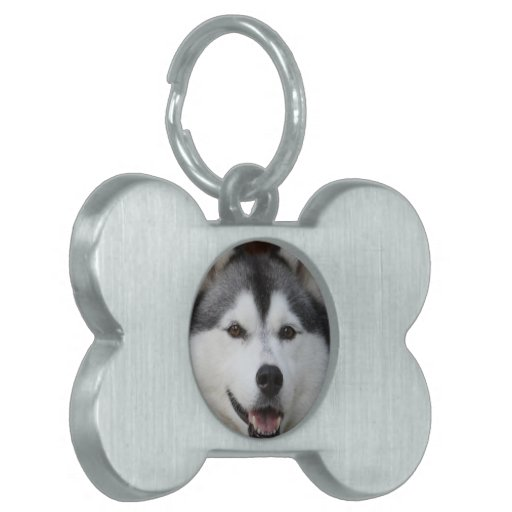 Husky Dog  Pet Tag