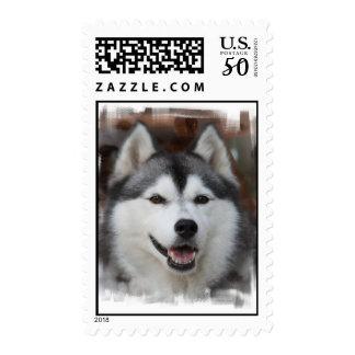 Husky Dog Postage Stamp