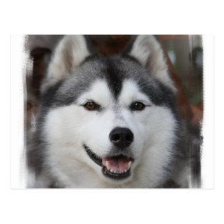 Husky Dog Postcard