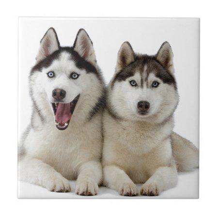 Husky Dogs Tile