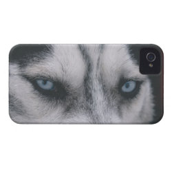 Case-Mate iPhone 4 Barely There Universal Case with Siberian Husky Phone Cases design