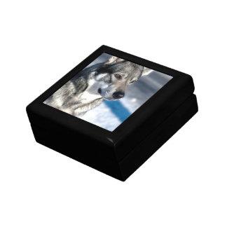 """Husky in Snow 5"""" Gift Box"""