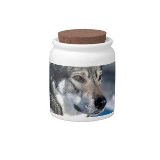 Husky in Snow Candy Jar