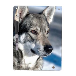 Husky in Snow Dry Erase Board