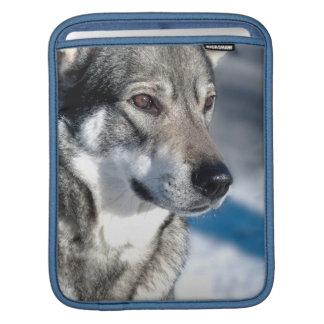 Husky in Snow iPad Sleeve