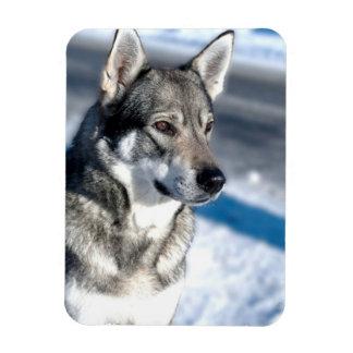 Husky in Snow Premium Magnet Flexible Magnets