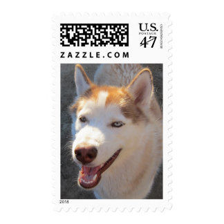 Husky in the morning postage