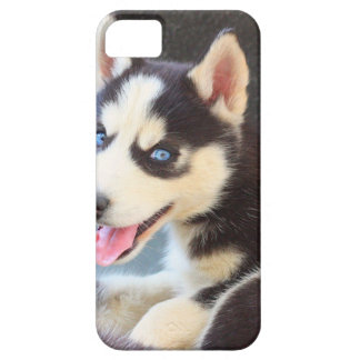 Husky iPhone 5 case