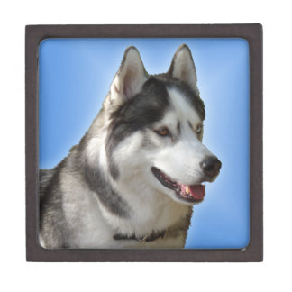 Husky Jewelry Box Husky Sled Dog Eyes Gift Box Premium Gift Box