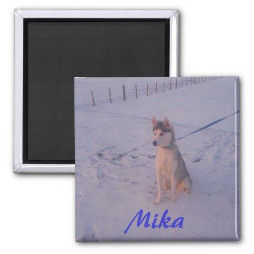 Husky.Mika.magnet Imán