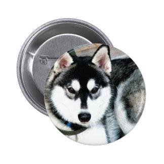 Husky Pinback Button