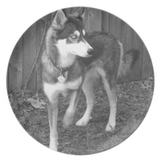 Husky Plate