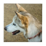 Husky Portrait Ceramic Tile