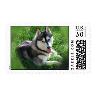 Husky Postage Stamp