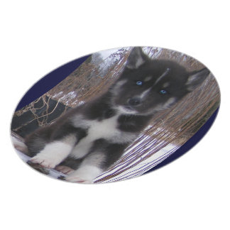 Husky Pup Plate