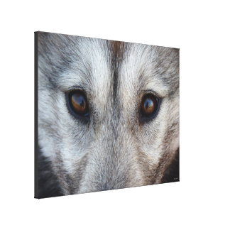 Husky Pup Print Husky Wolf Pup Canvas Print