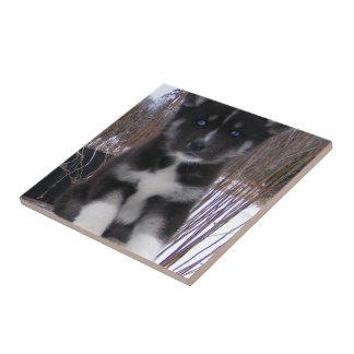 Husky Pup Tile