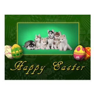 Husky puppies Easter Postcard