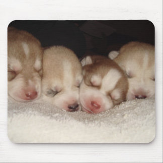 Husky puppies mousepad