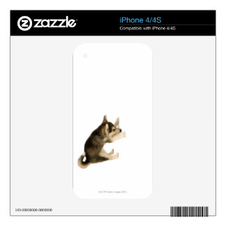 Husky Puppy 2 Skin For iPhone 4