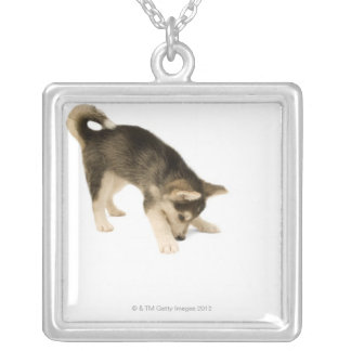 Husky Puppy 2 Square Pendant Necklace