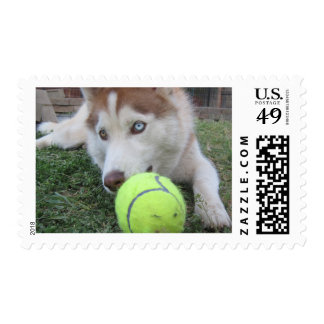 Husky Puppy and the football Postage