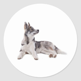 husky puppy classic round sticker