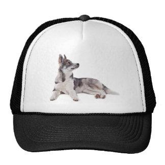 husky puppy mesh hats