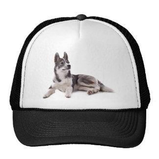 husky puppy trucker hat