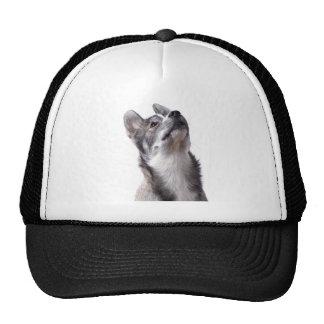 Husky puppy hats