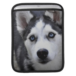 iPad Sleeve with Siberian Husky Phone Cases design