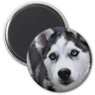 Husky Puppy Magnet Fridge Magnet