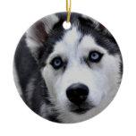Husky Puppy Ornament