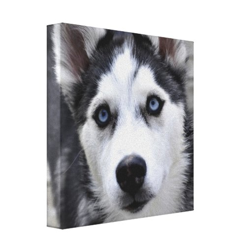 Husky Puppy Stretched Canvas Print