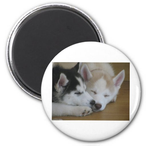 Husky pups 2 inch round magnet