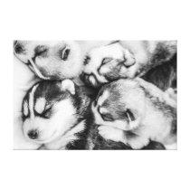 Husky pups in slumber canvas print