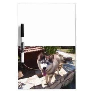 Husky Sam Dry-Erase Whiteboard
