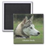 Husky Siberian dog beautiful photo fridge magnet,
