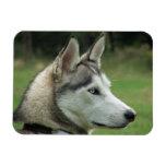 Husky Siberian dog beautiful photo magnet, gift