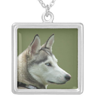 Husky Siberian dog beautiful photo necklace, gift Silver Plated Necklace