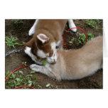 Husky siberiano (3) tarjetón
