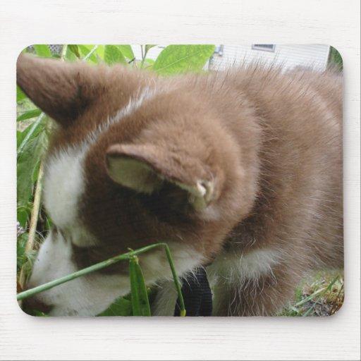 Husky siberiano alfombrilla de raton