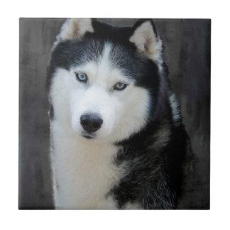 Husky siberiano azulejo cuadrado pequeño