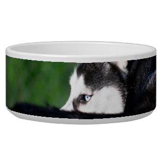 Husky siberiano comedero para mascota