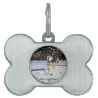 Husky siberiano en la nieve placa de nombre de mascota