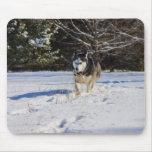 Husky siberiano en la nieve tapete de raton