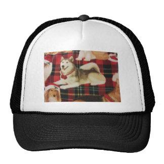 Husky siberiano gorras de camionero